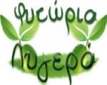 Φυτώρια ελιάς Λυγερά